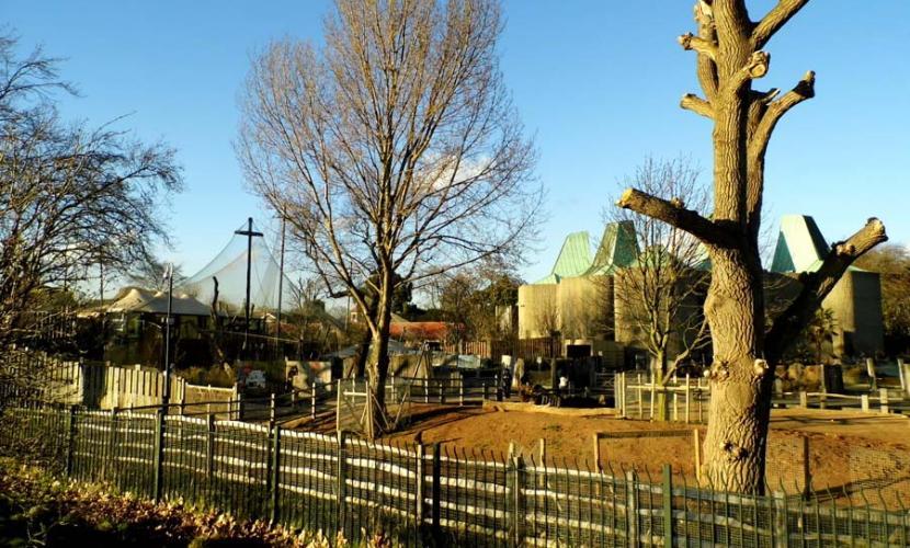 Camden Town Zoo near Regent's Park